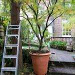New plant pot