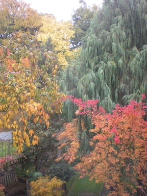 Autumn colours at 44.